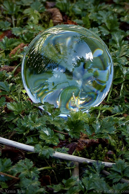 lensball among green leaves, reflecting a colourful mandala