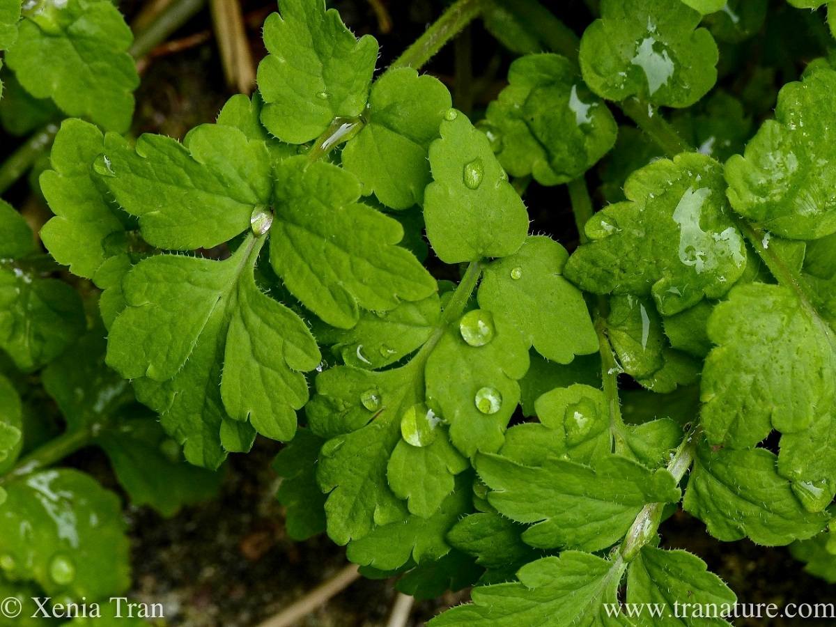 close up shot of green leaves with raindrops