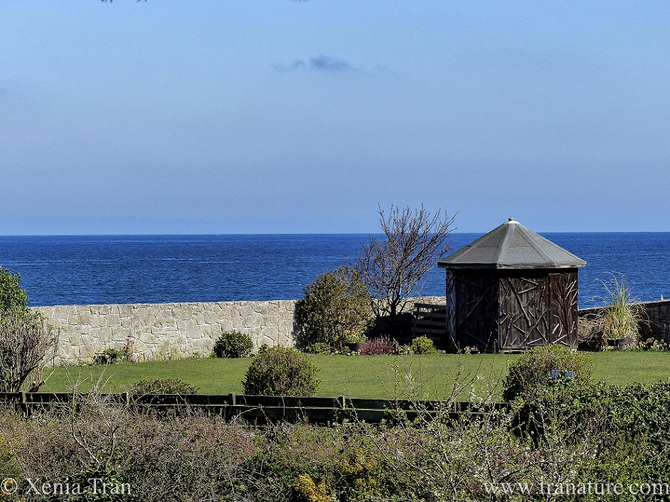 a small wooden shed beside a garden wall by the seaside