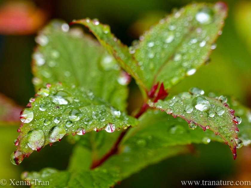 macro shot of green leaves covered in raindrops