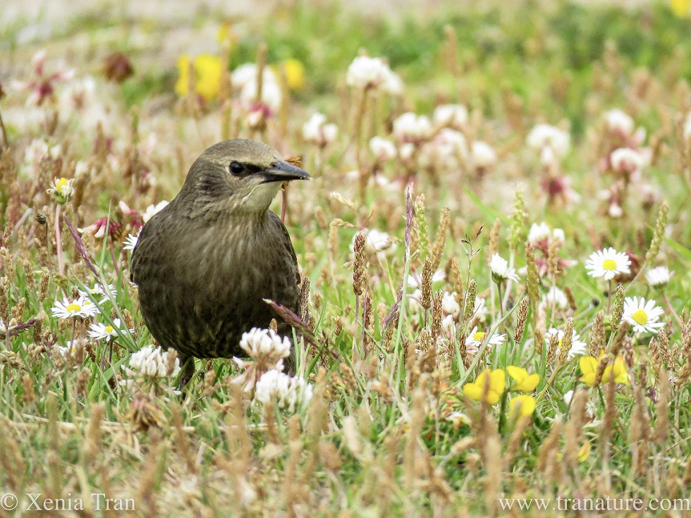 a juvenile warbler among grass and wildflowers