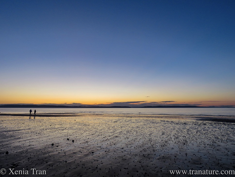 sunset on the beach at low tide with silhouettes of two people walking
