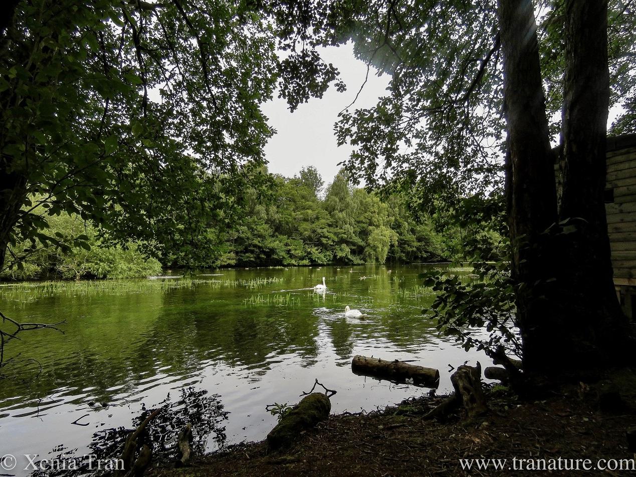 Silent Sunday: Woodland Wander