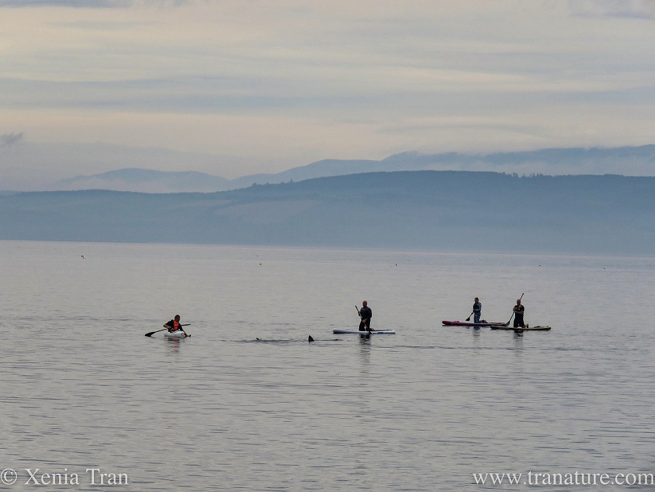 paddle boarders and basking shark