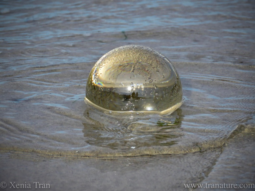 a lensball on the beach with tidal water
