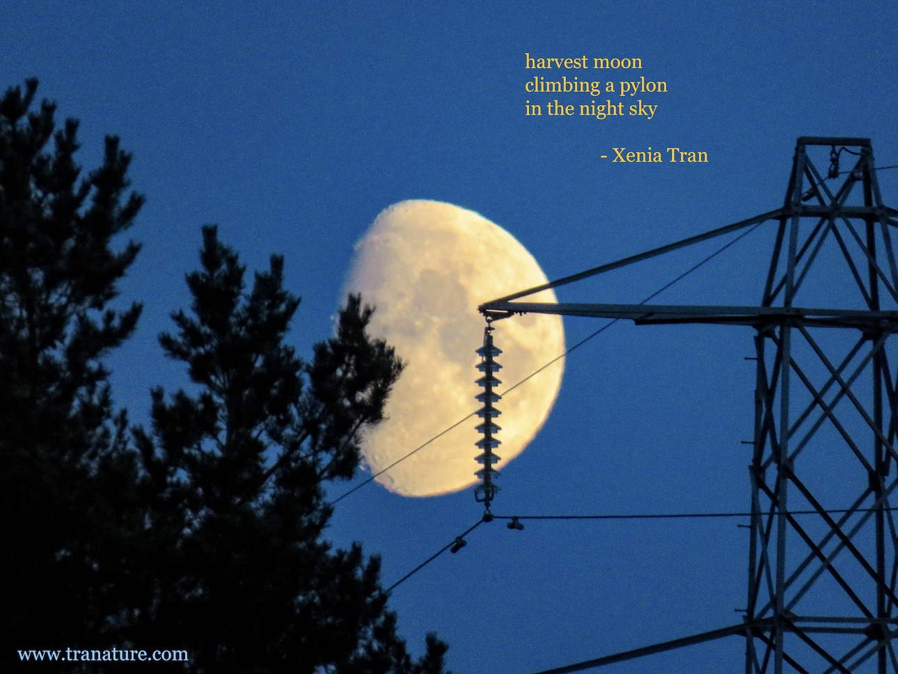 Haiku: Harvest Moon