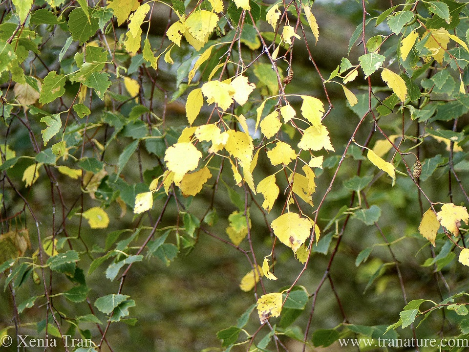 close up of green and golden leaves