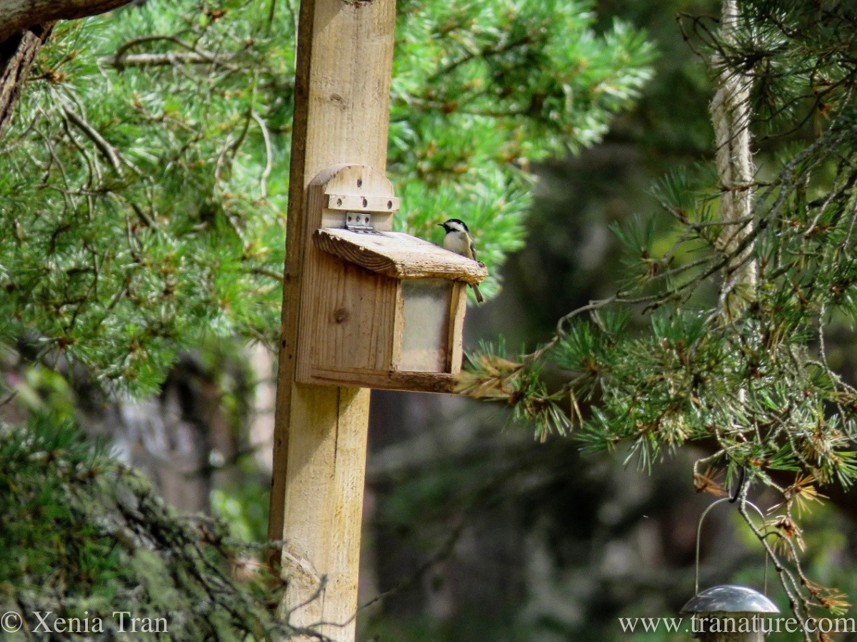 Wordless Wednesday: Forest Feeders