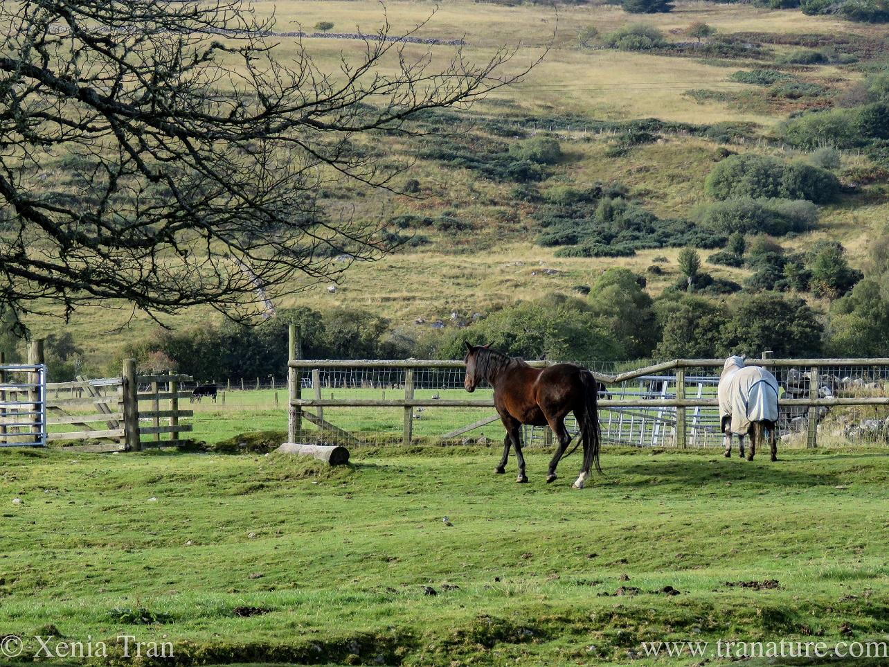 Silent Sunday: Equine Equilibrium