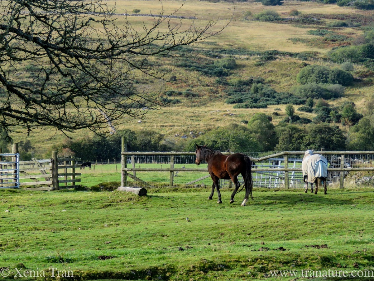 a dark bay mare and a rugged up mare in a paddock