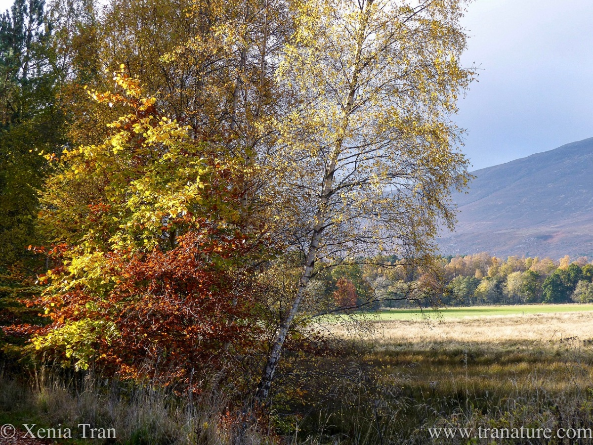 trees in autumn colours within the glen