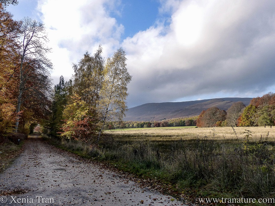 a country lane beside a field in the glen surrounded by trees