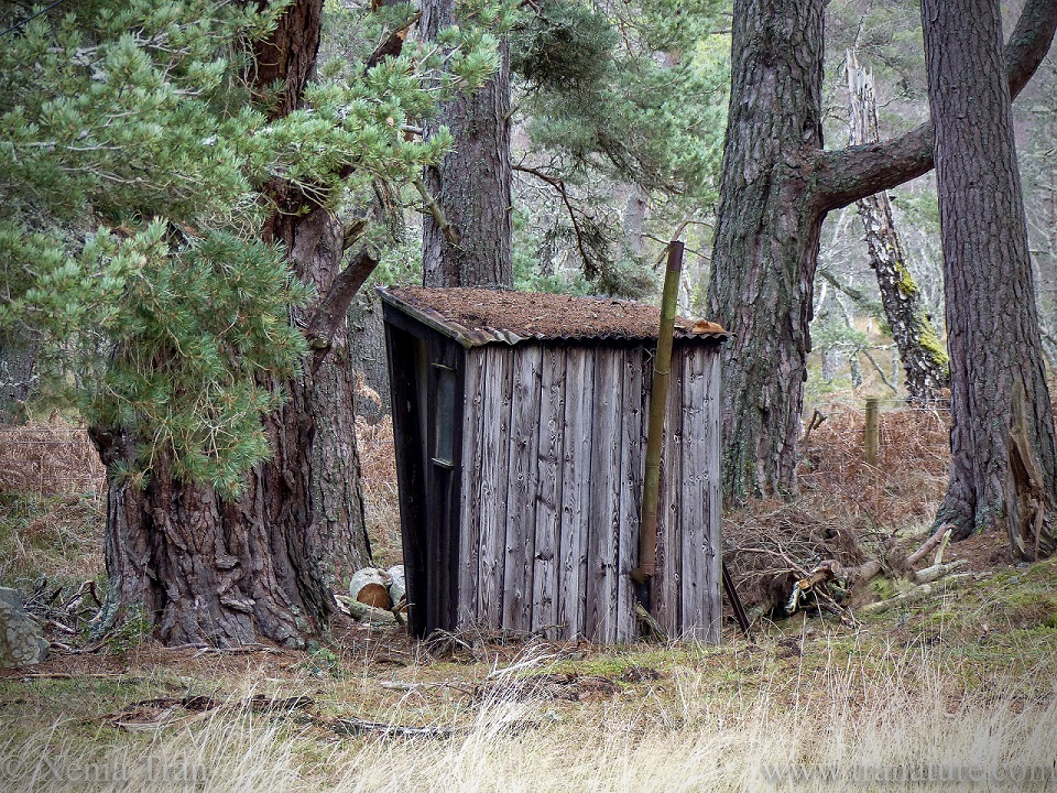 an abandoned shed in the woods