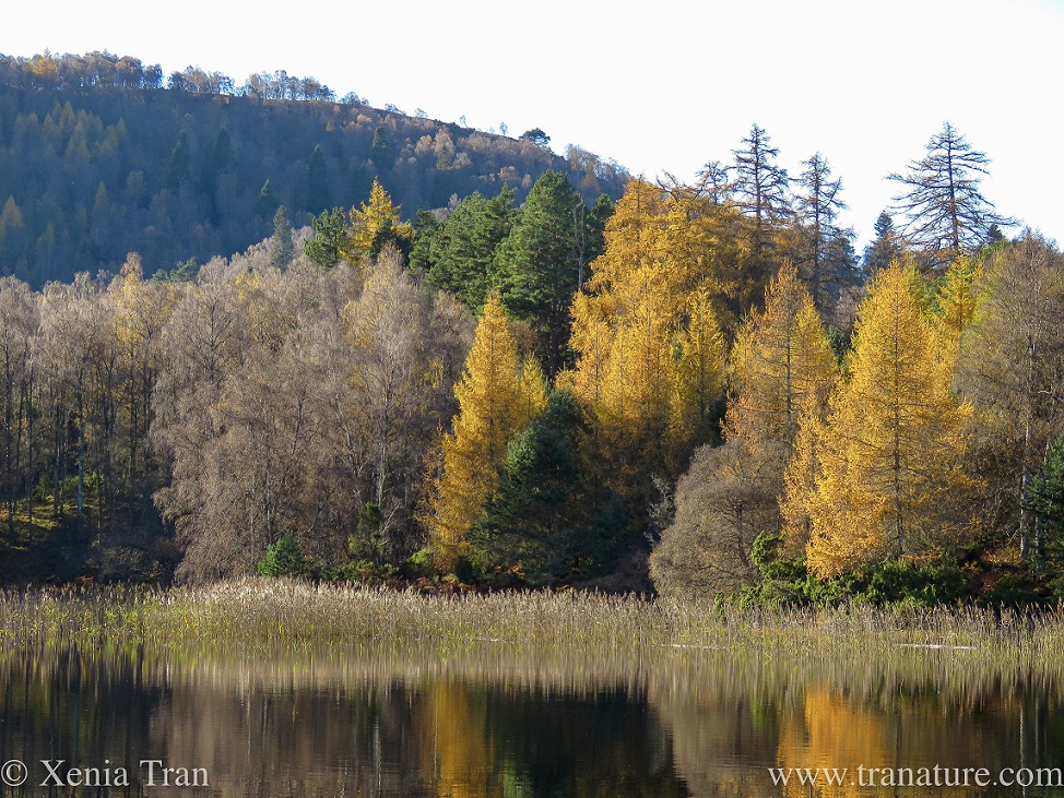 autumn colours, trees and their reflections in the loch