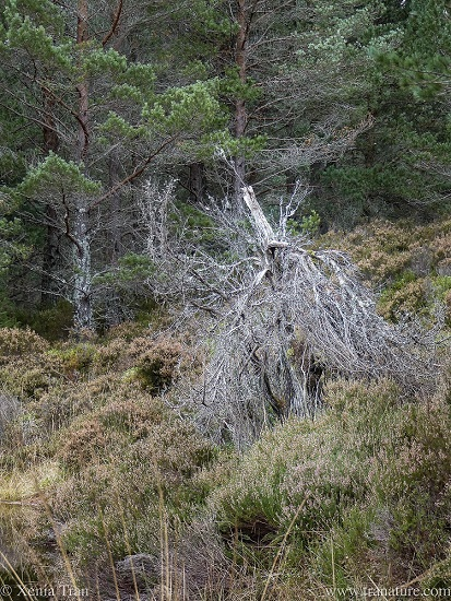 brown heather and grass in autumn with a dead tree