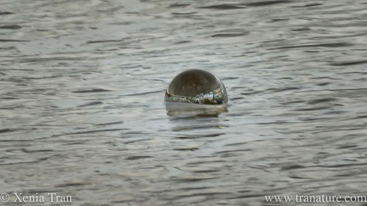 a lensball surrounded by the incoming tide with rainbows and bubbles reflected