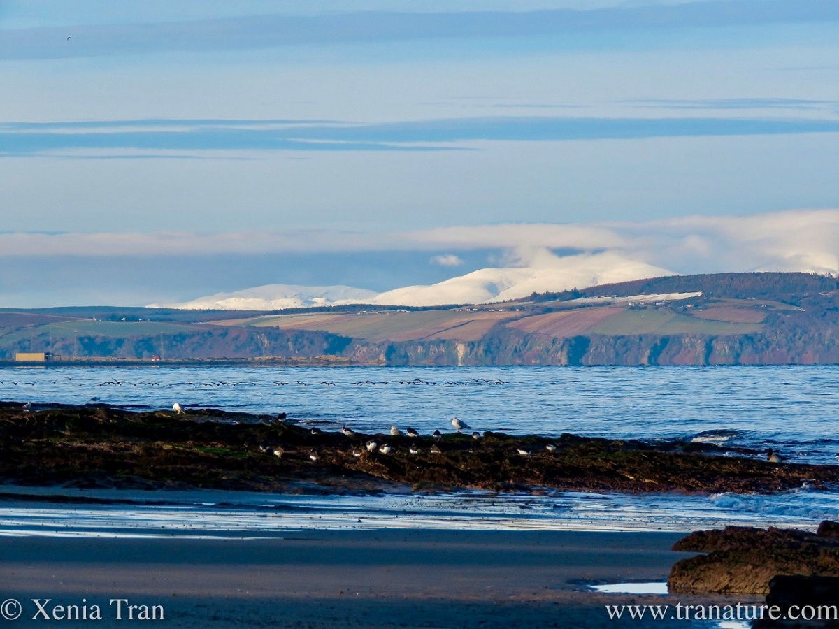 snow capped mountains across the Moray Firth with outcrops and tidal sands in the foreground