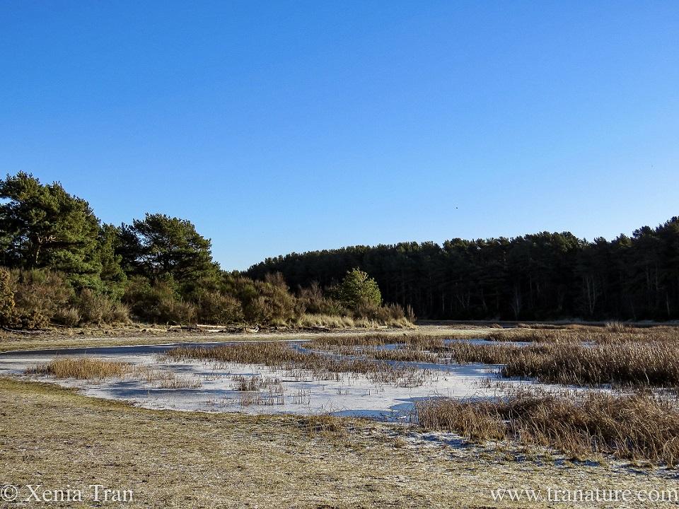 partially frozen wetlands in winter