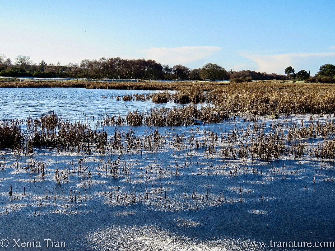 Silent Sunday: Winter Wetlands