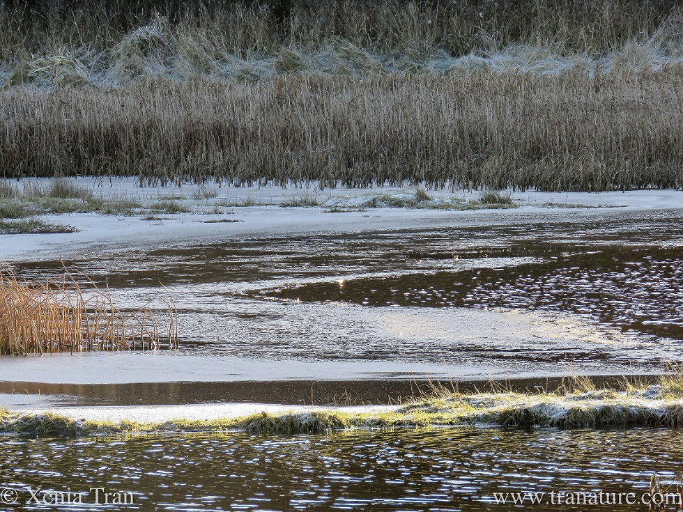 close up of frozen reeds and ice and flowing water