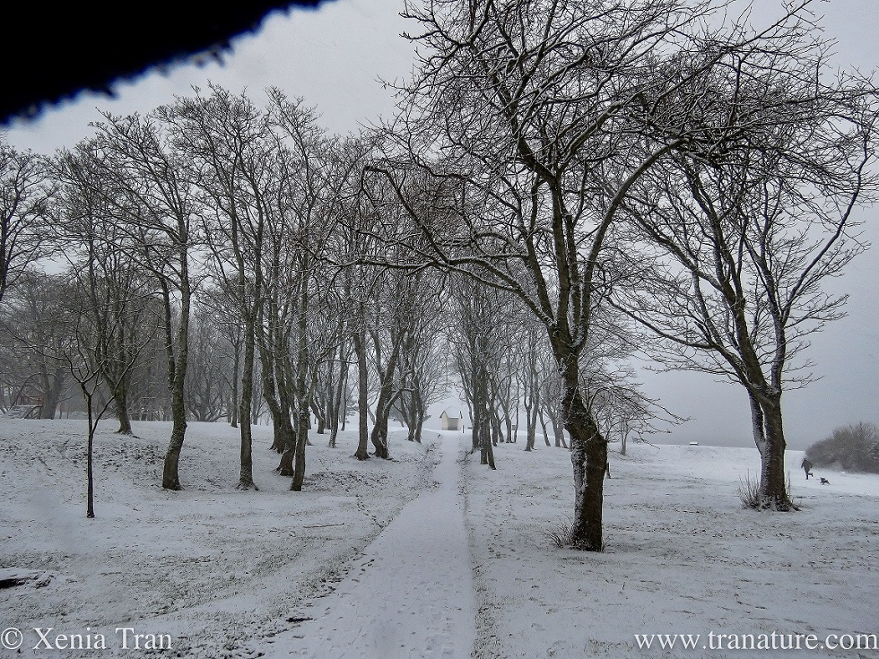 leafless trees in a park covered in snow