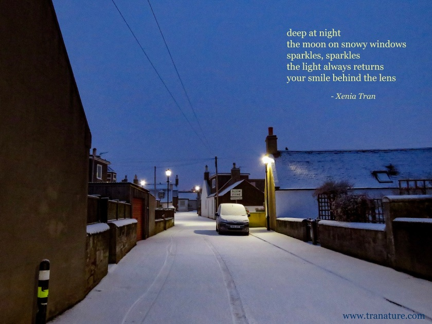 tanka poem by Xenia Tran with an image of a snow covered street with lit street lamps