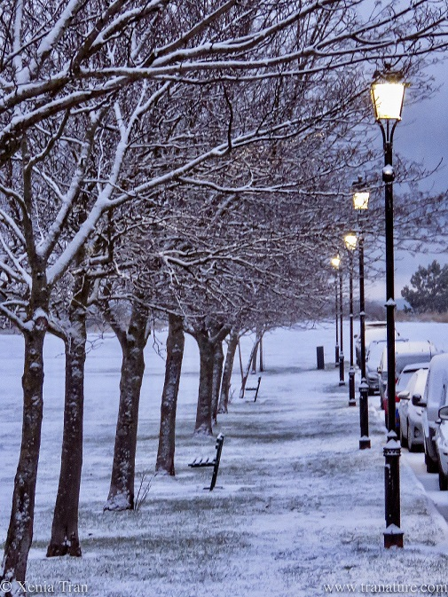 snow-covered trees next to lit victorian street lights and parked cars