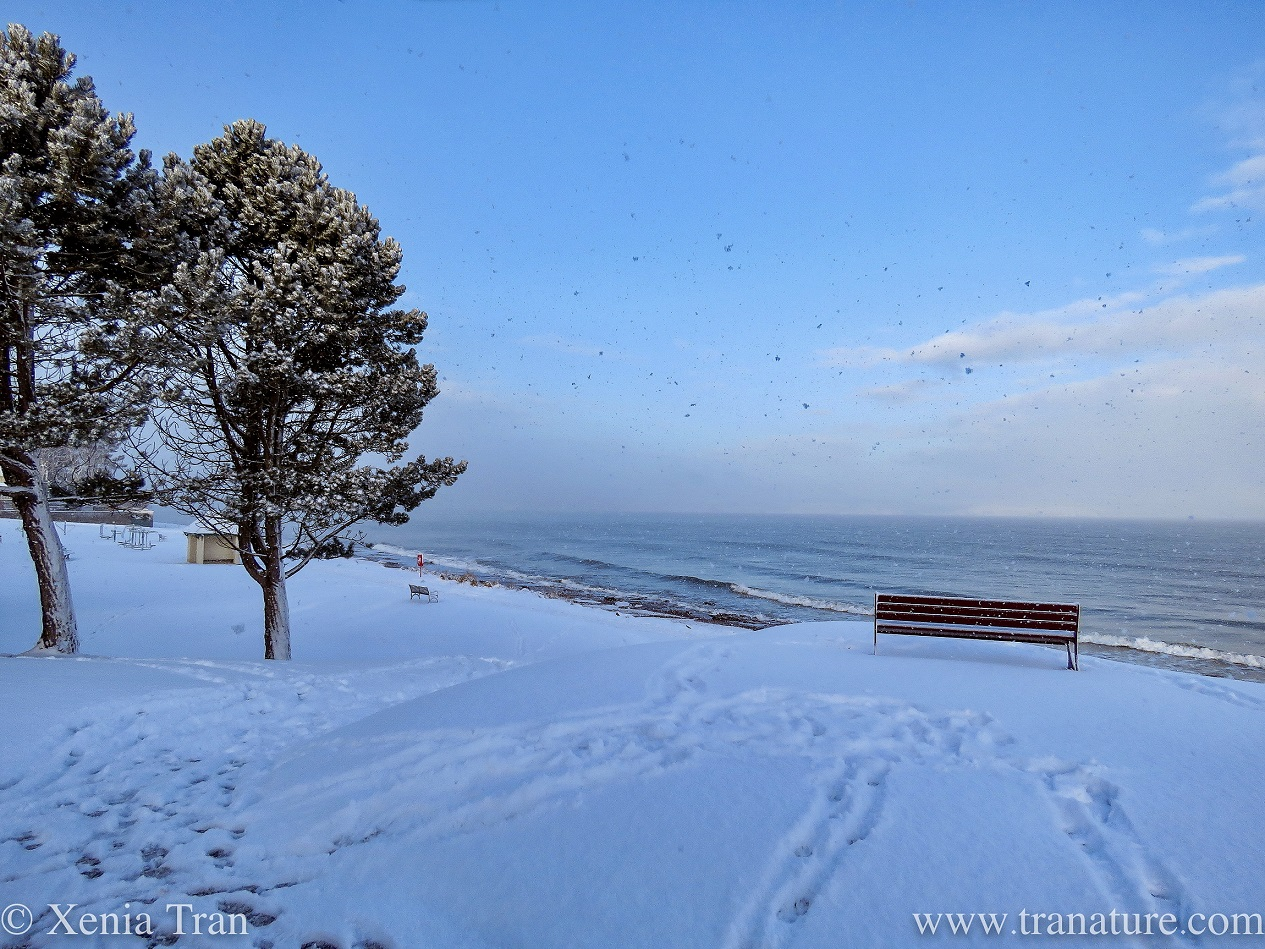 Silent Sunday: Snow Scenes from the Sea Shore