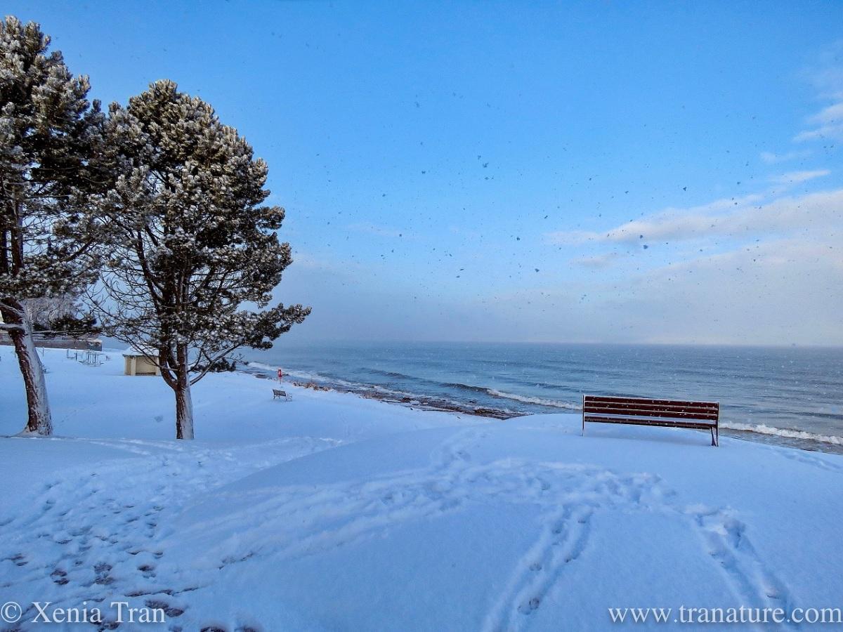 Silent Sunday: Snow Scenes from the SeaShore