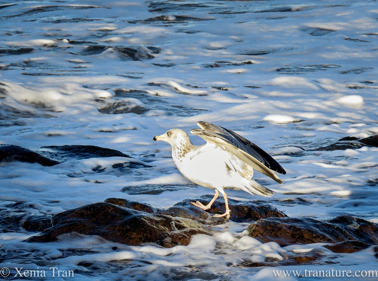 Wordless Wednesday: Sea Foam and Silver Wings