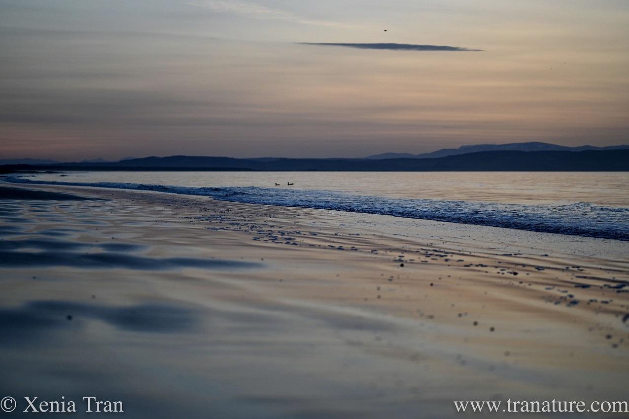Silent Sunday: Tranquil Sea