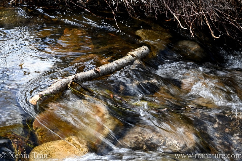 a clear mountain stream flowing over stones and branches