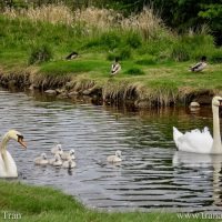 Silent Sunday: Welcome to the World