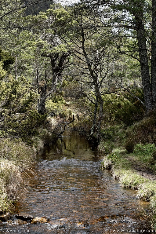 a mountain stream running through a forest in the glen