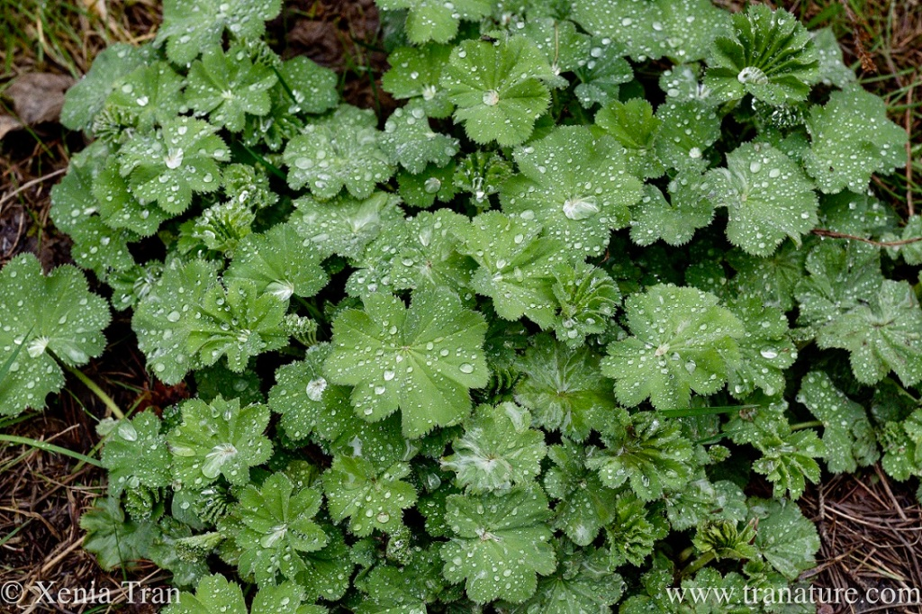 green leaves covered in raindrops on a mountain trail