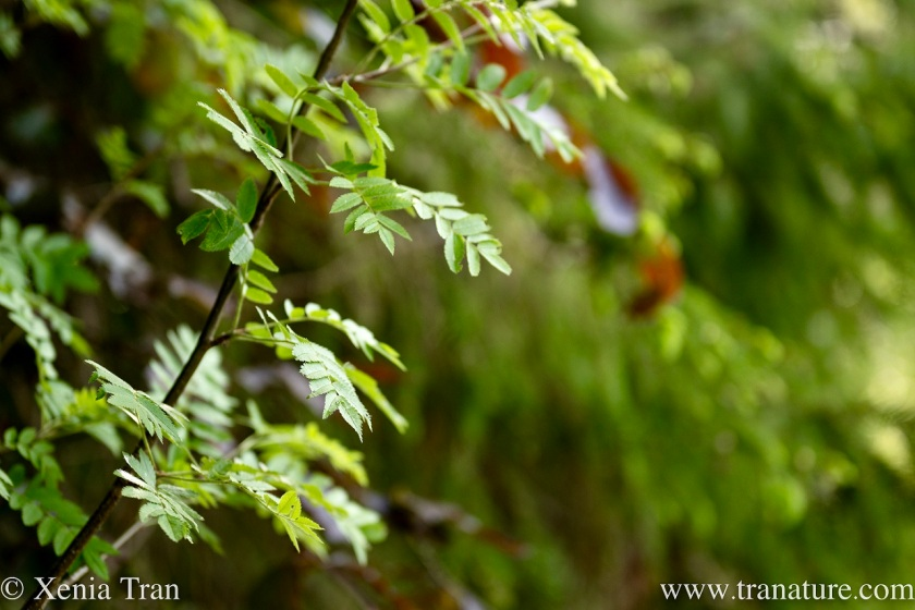 close up of young leaves in the forest
