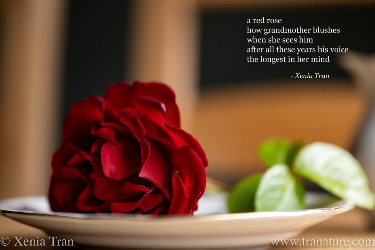 a tanka poem by Xenia Tran in the corner of the image with a red rose on a small plate