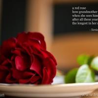 Tanka: Red Rose