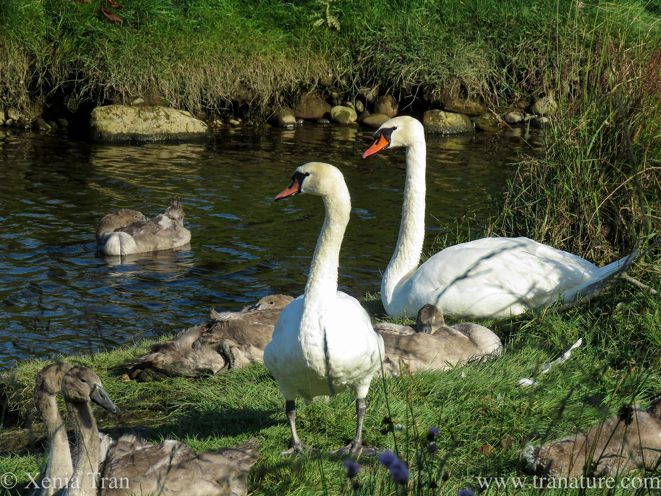 Silent Sunday: On a Bend in the River