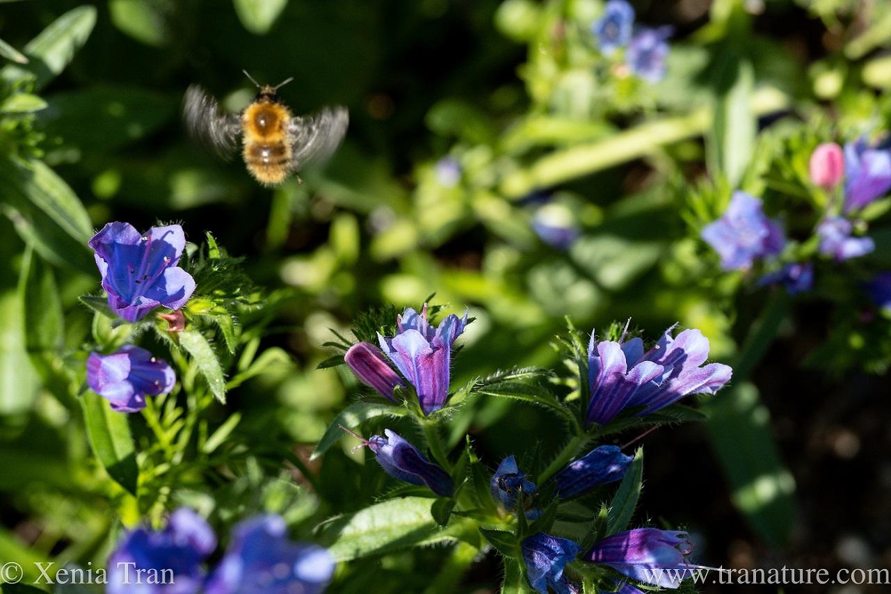 Wordless Wednesday: Wonderful Wildflowers