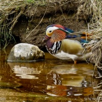 Caring for River Wildlife
