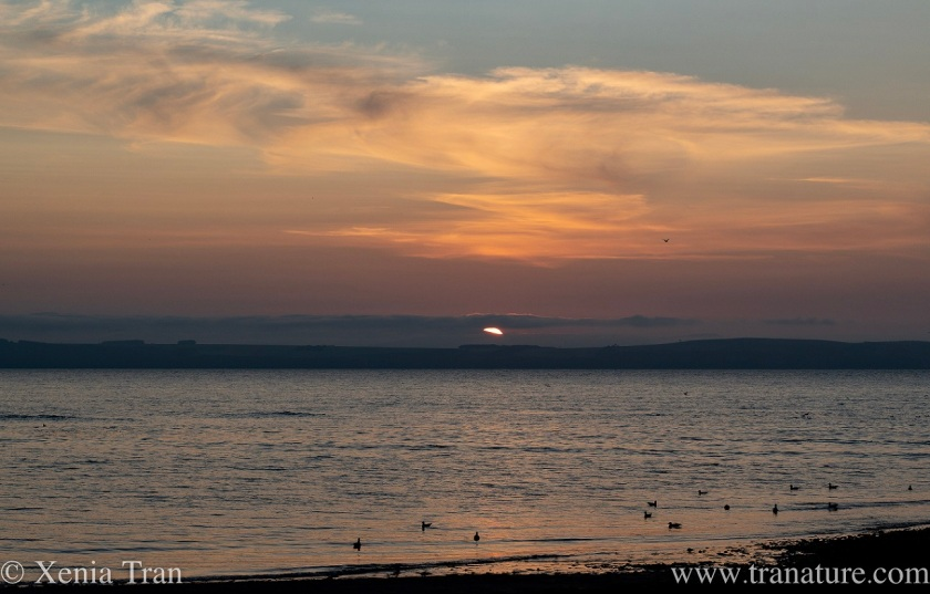 a purple sunset sky over the moray firth