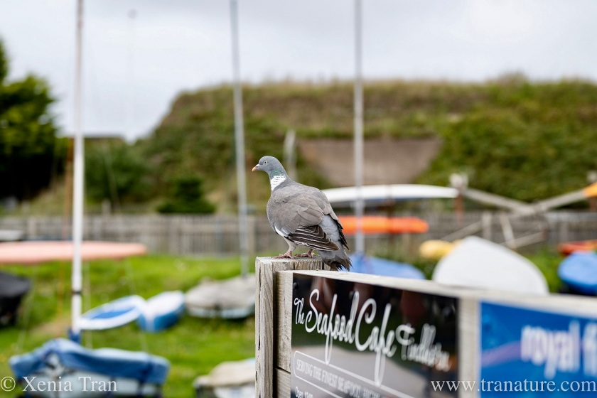 a pigeon resting on a sign overlooking a boat park