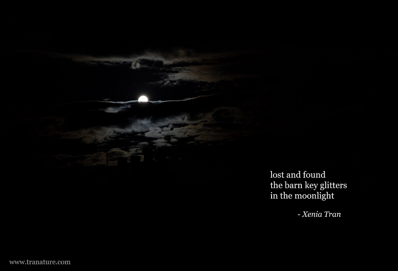 Haiku: Moonlight