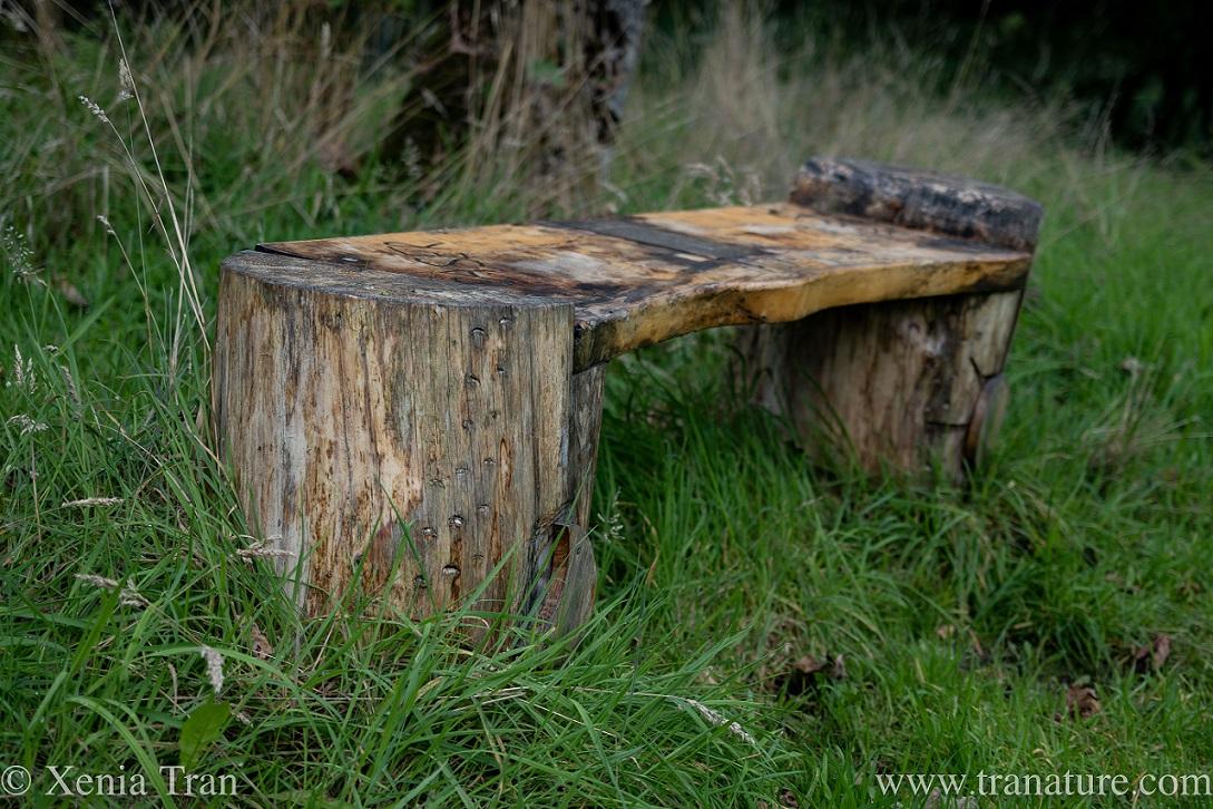 weathered wooden memorial bench
