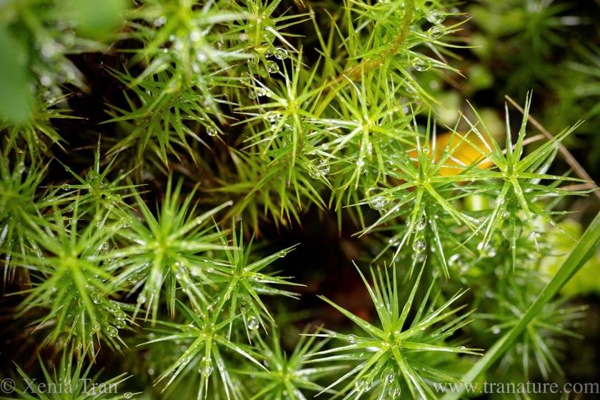 macro shot of green moss with raindrops