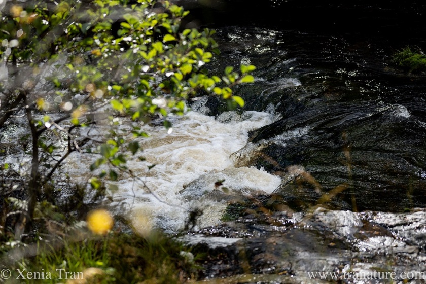 a fast-flowing river seen from above through the trees