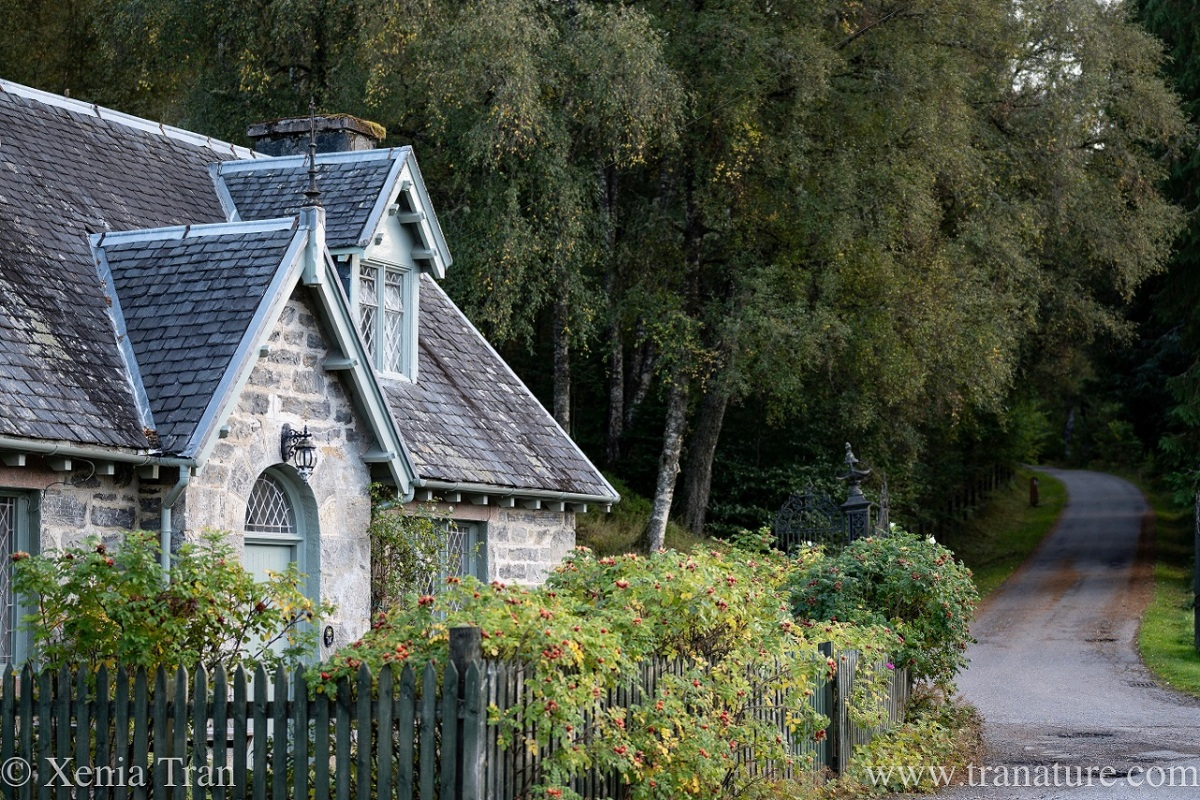a Victorian cottage on the edge of a wood